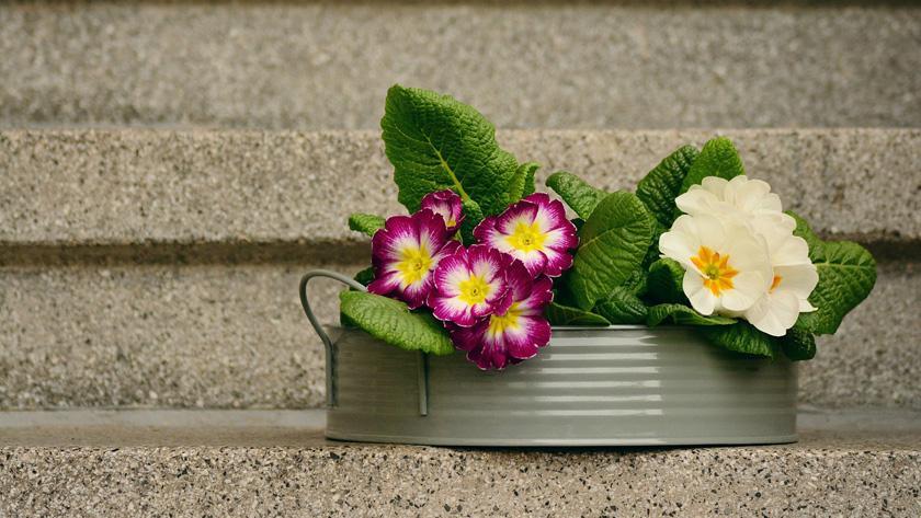 kamerplanten die bloeien