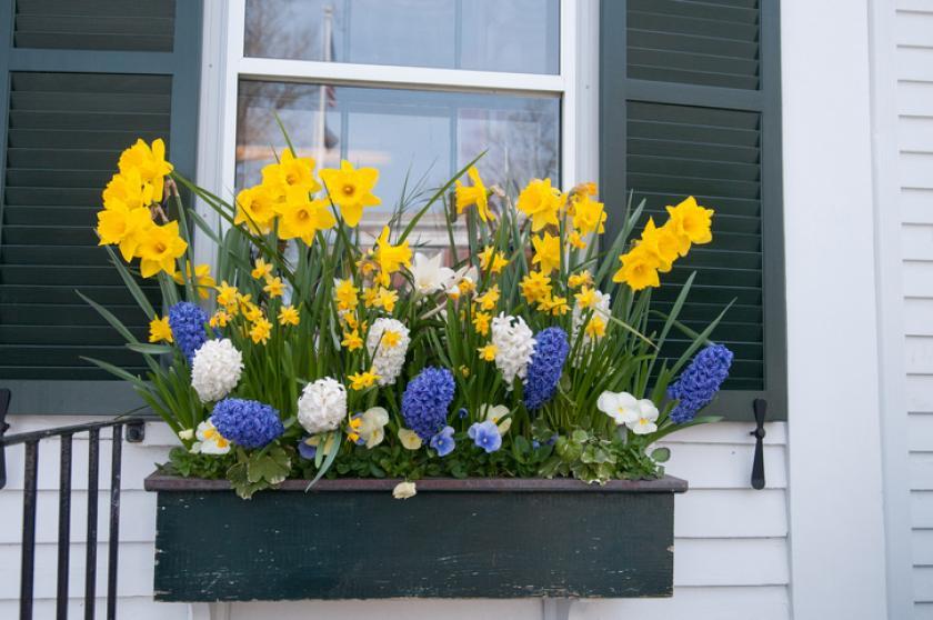 bloembak lente
