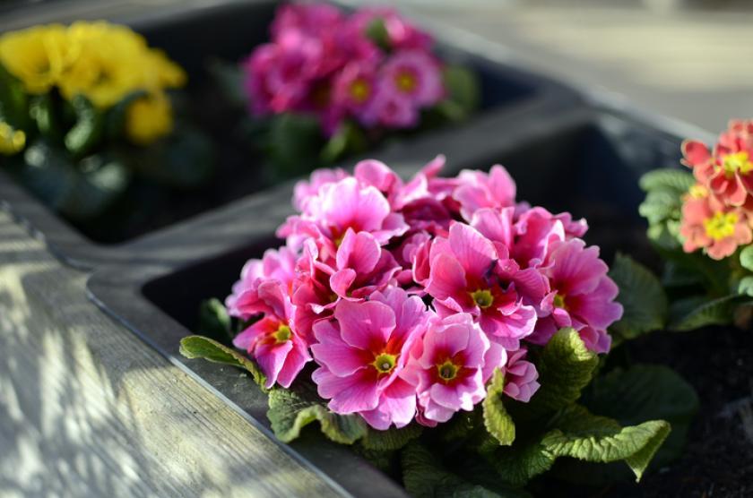 bloembakken lente