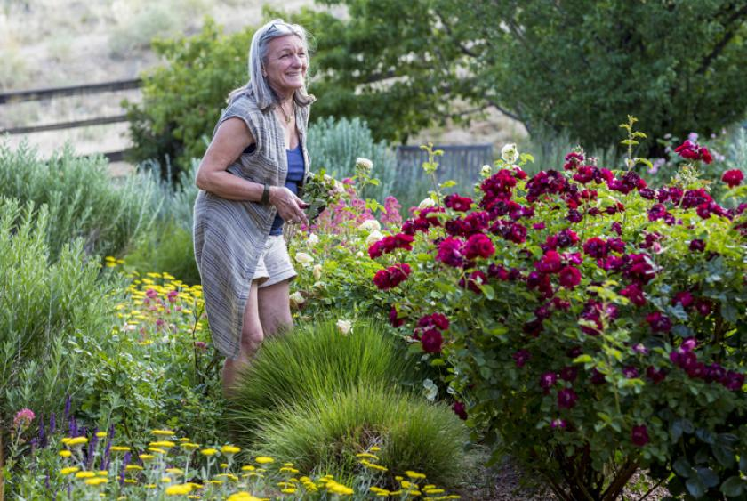 rozen planten tuin
