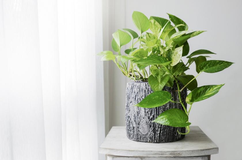 kamerplant gezond