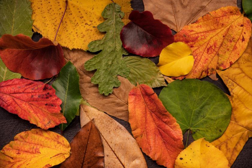 bladeren tuin herfst