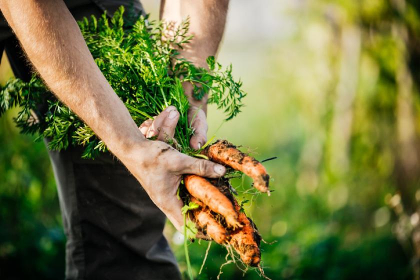 wortels moestuin