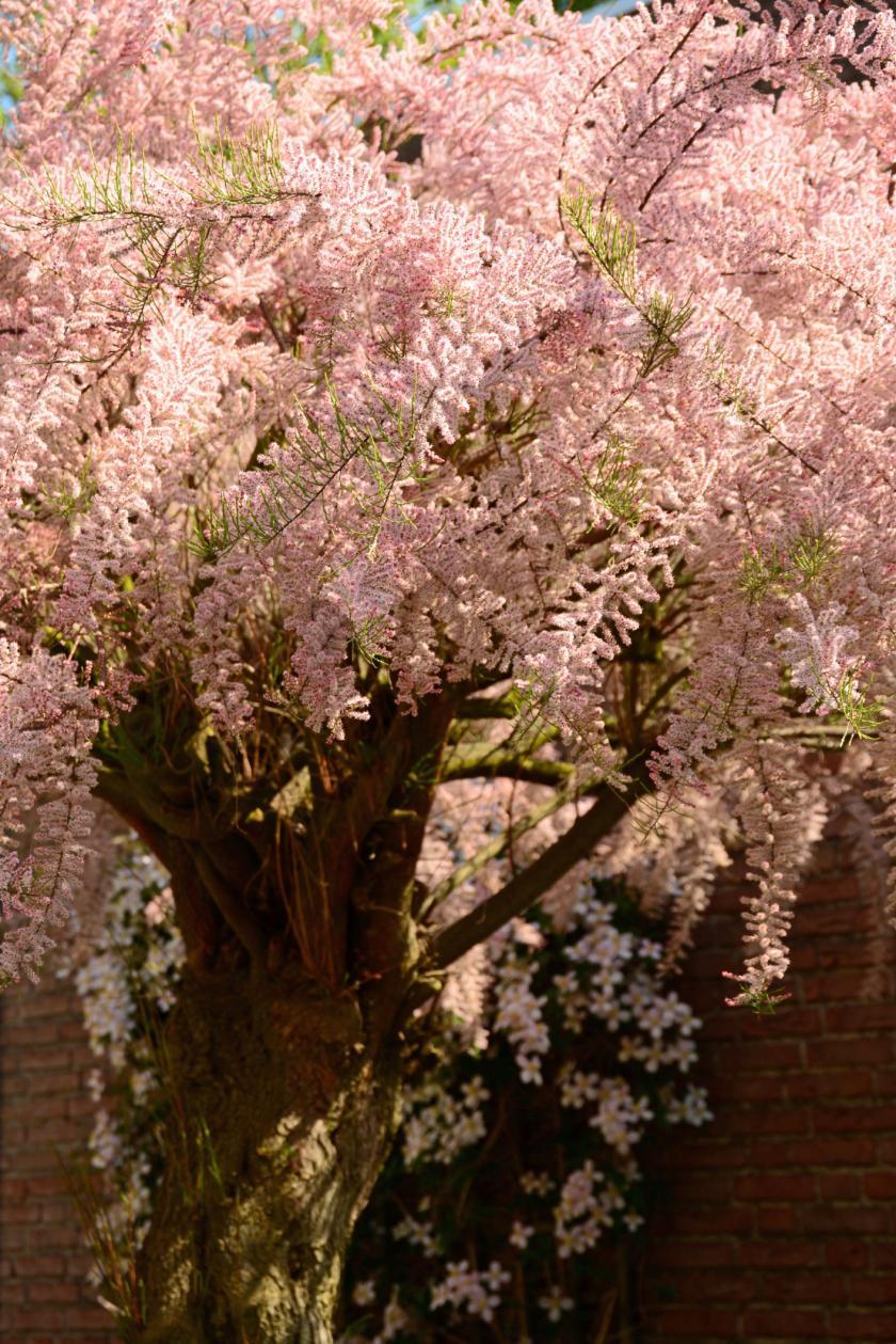 kleine boom tuin