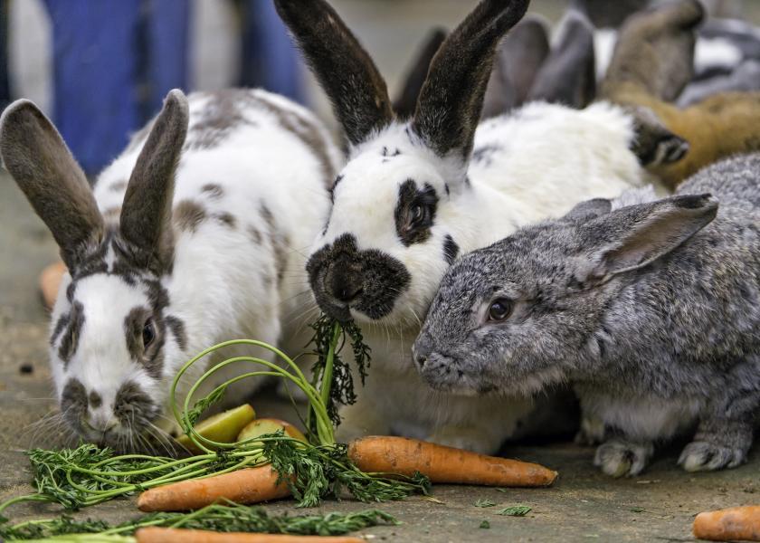 konijn als huisdier