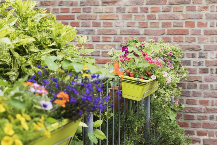 Trends voor bloembakken