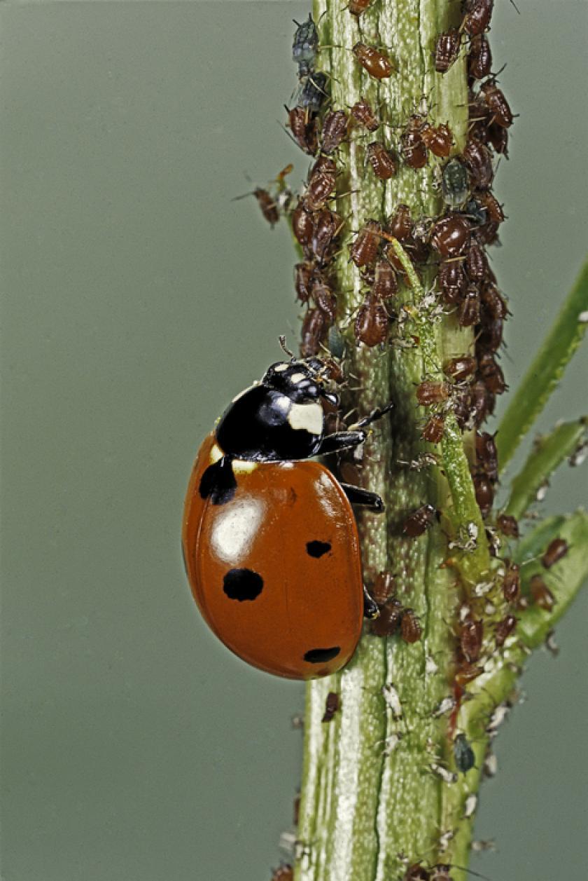 insectenplaag