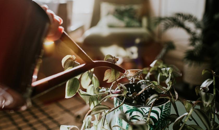 kamerplant schimmel potgrond