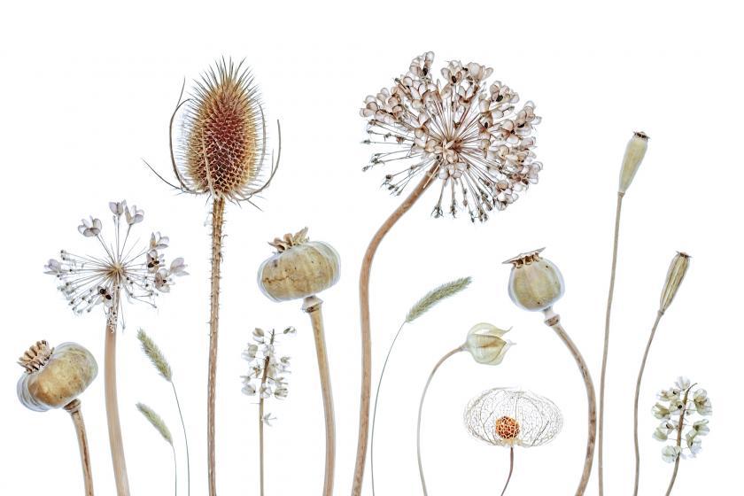 zaden bloemen bewaren