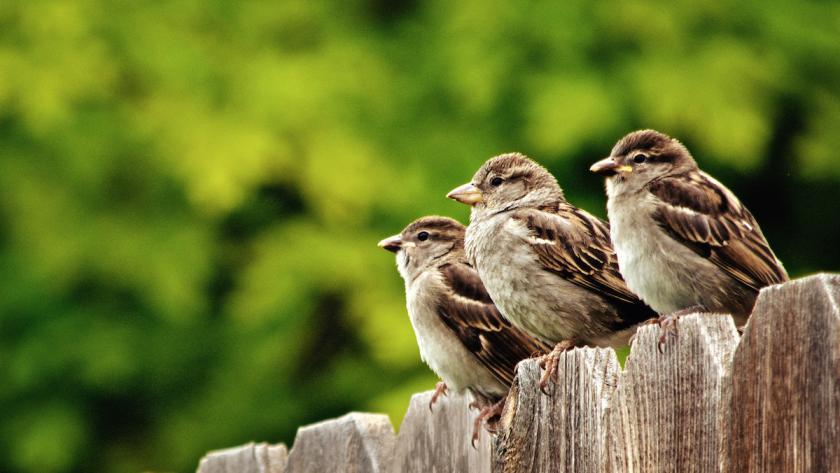 Afbeeldingsresultaat voor vogels in tuin