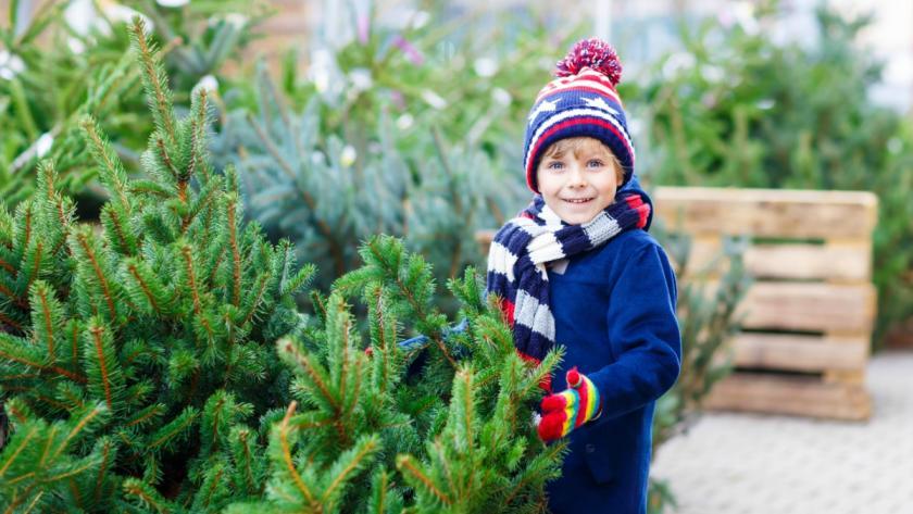 Wanneer Is Het Beste Moment Om Een Kerstboom Te Kopen Libelle