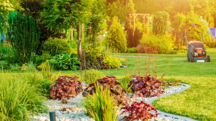 Kleur Veel Kleur : 10x herfstbloeiers die voor veel kleur in je tuin zorgen libelle