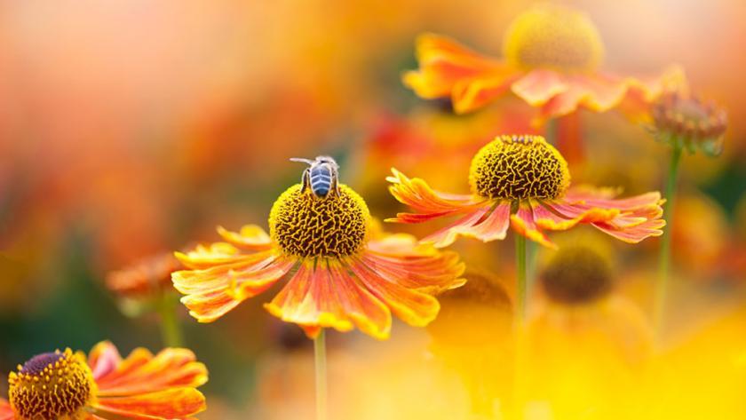 4d615f1d0f99e Le top 6 des fleurs qui attirent les abeilles - Femmes d'Aujourd'hui