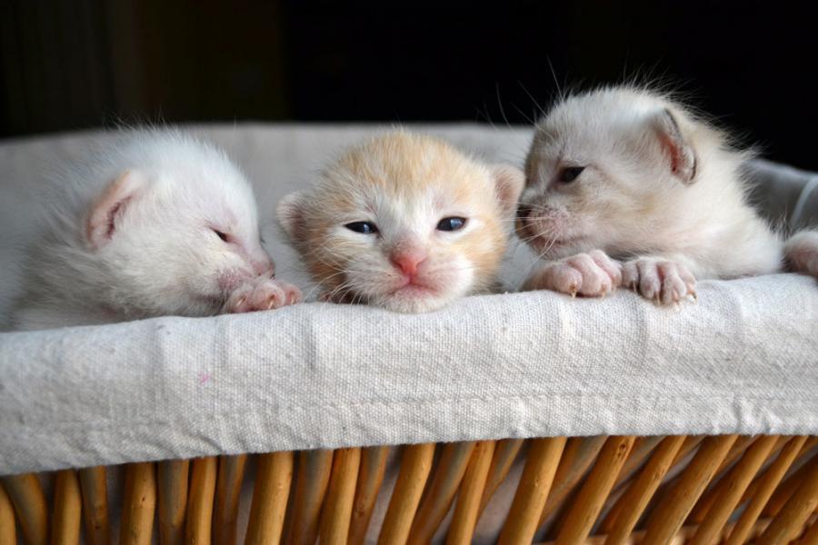 kittens gevonden