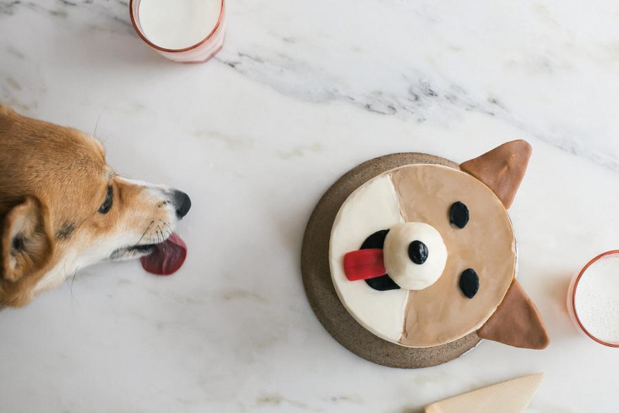 Gâteaux-chiens