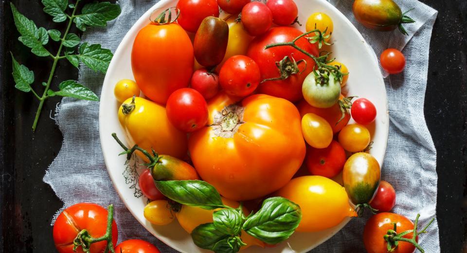 De juiste tomaat voor elk gerecht
