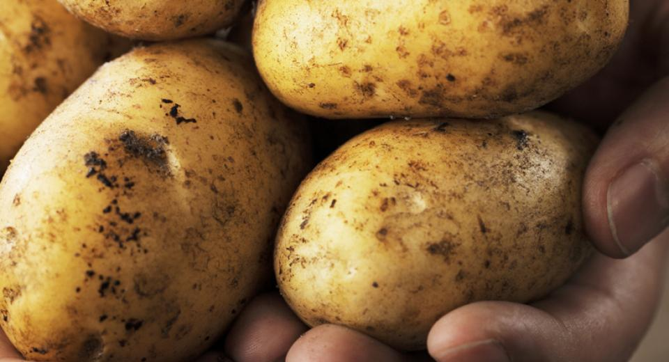 Elke dag lekker met aardappelen
