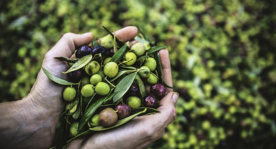 Wat is het verschil tussen groene en zwarte olijven?