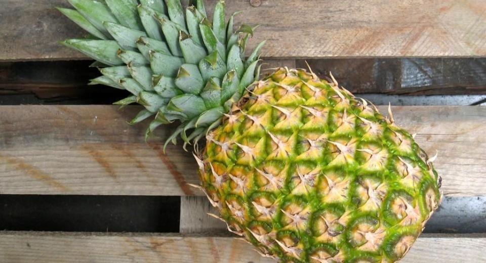Comment faire pousser un ananas à la maison? (vidéo)