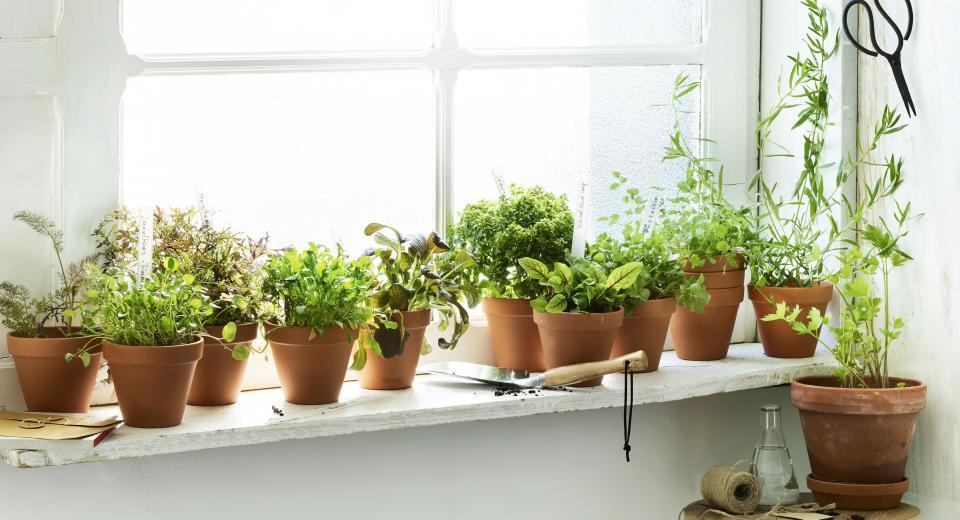 Knip je slaatje: kruiden en sla kweken op de vensterbank