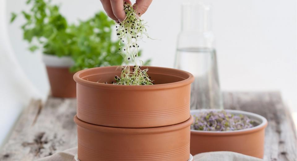 Zelf kiemgroenten kweken: zo makkelijk is dat