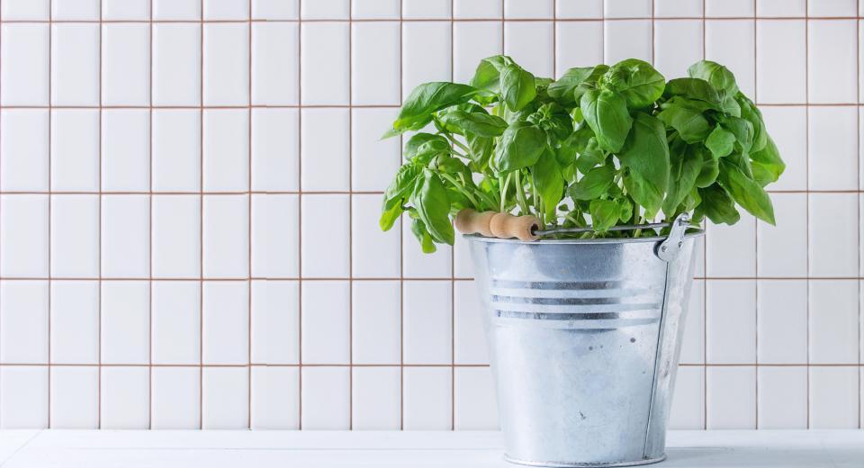 16 verrassende recepten met basilicum die je geprobeerd moet hebben