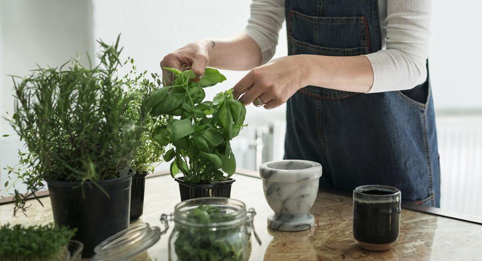 Les 10 façons d'utiliser et conserver ses plantes aromatiques