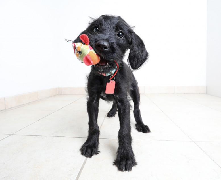 C'est la période idéale pour adopter un animal dans un refuge - Getty Images