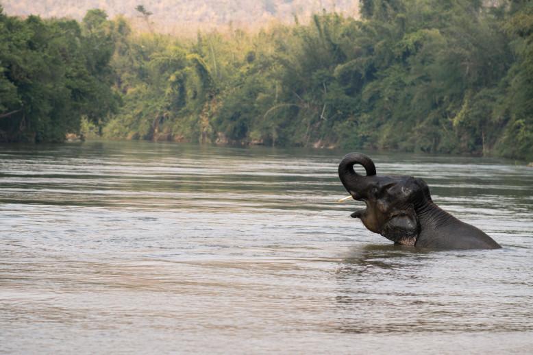 Les éléphants thaïlandais retrouvent la jungle - Getty Images