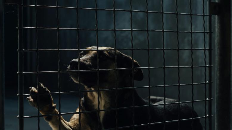 La France autorise les particuliers à vendre leurs animaux aux labos - Getty Images